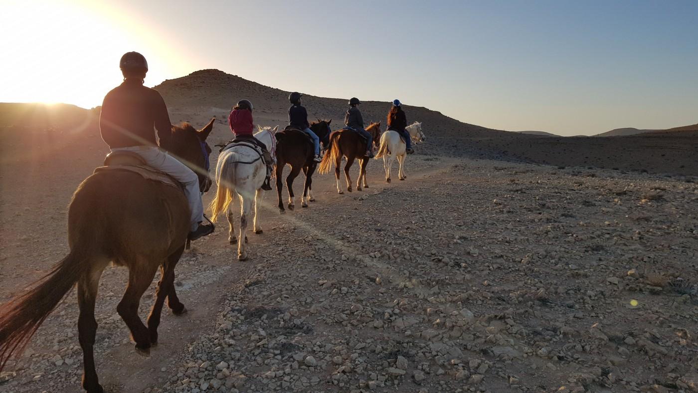 סוסים בנגב