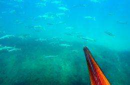 דייג בצלילה חופשית