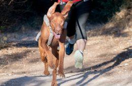 ריצה עם כלבים כצוות
