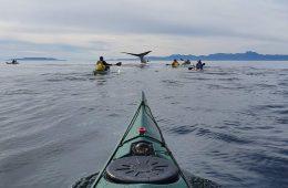 לוויתנים במקסיקו